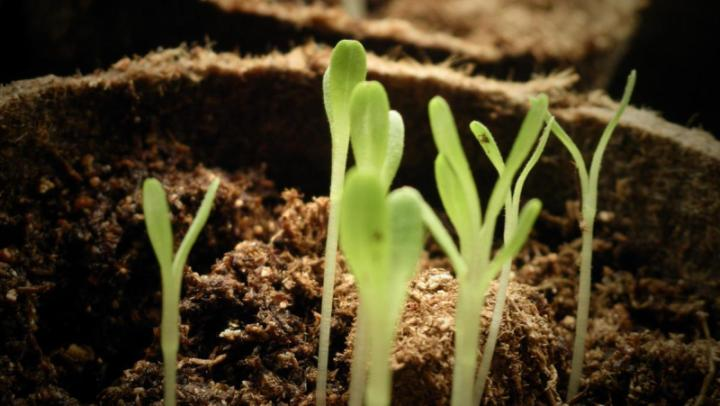 Sowing Seeds Indoors - Example of a Good Informative Speech Topic